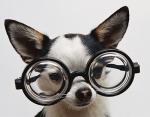Amerikkalaisissa elokuvissa älykkyyttä viestitään silmälaseilla.
